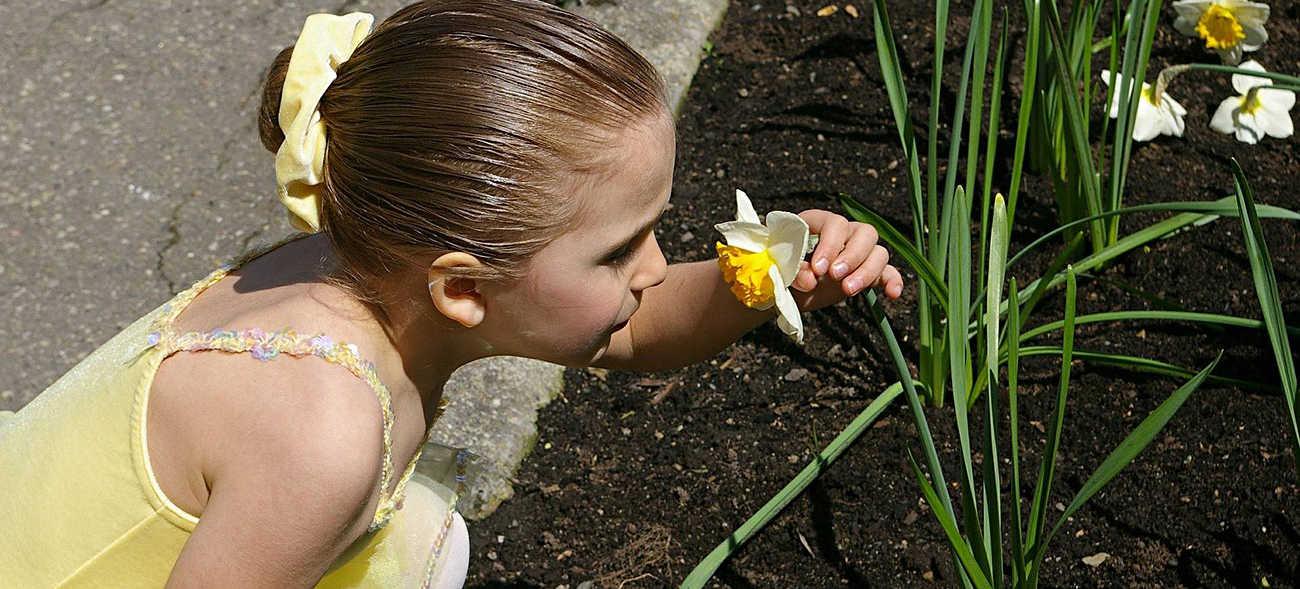 Inhalation mit Salz lindert Pollenallergien