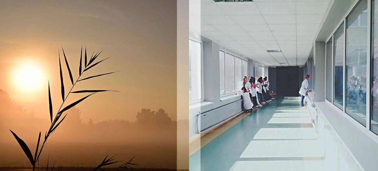Eine Organspende rettet Menschenleben – Organspende Deutschland
