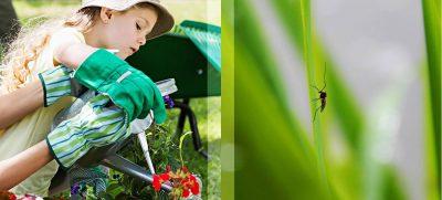 Neben Insektenstichen können auch manche Pflanzen für Hautirritationen sorgen – Gartenhandschuhe schützen.