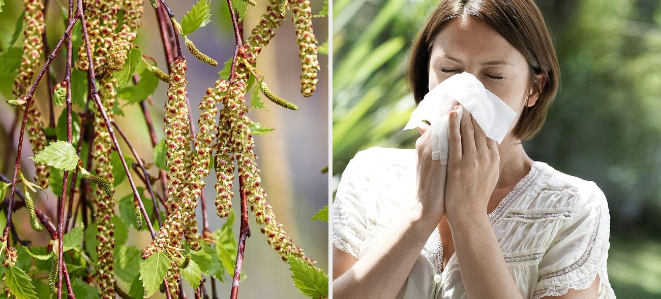 Draußen fliegen die Pollen nach Lust und Laune, doch zu Hause können wir uns schützen