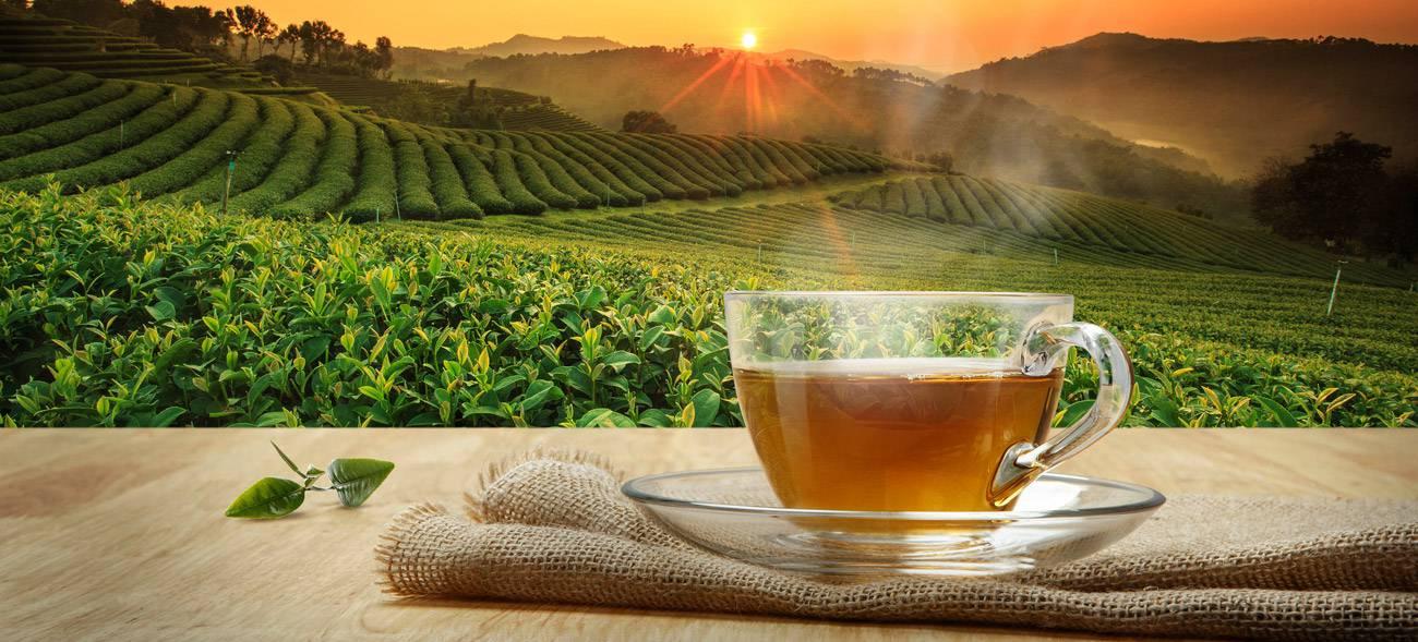 Als gesunder Tee entfalten viele Heilpflanze ihre Wirkung besonders gut.