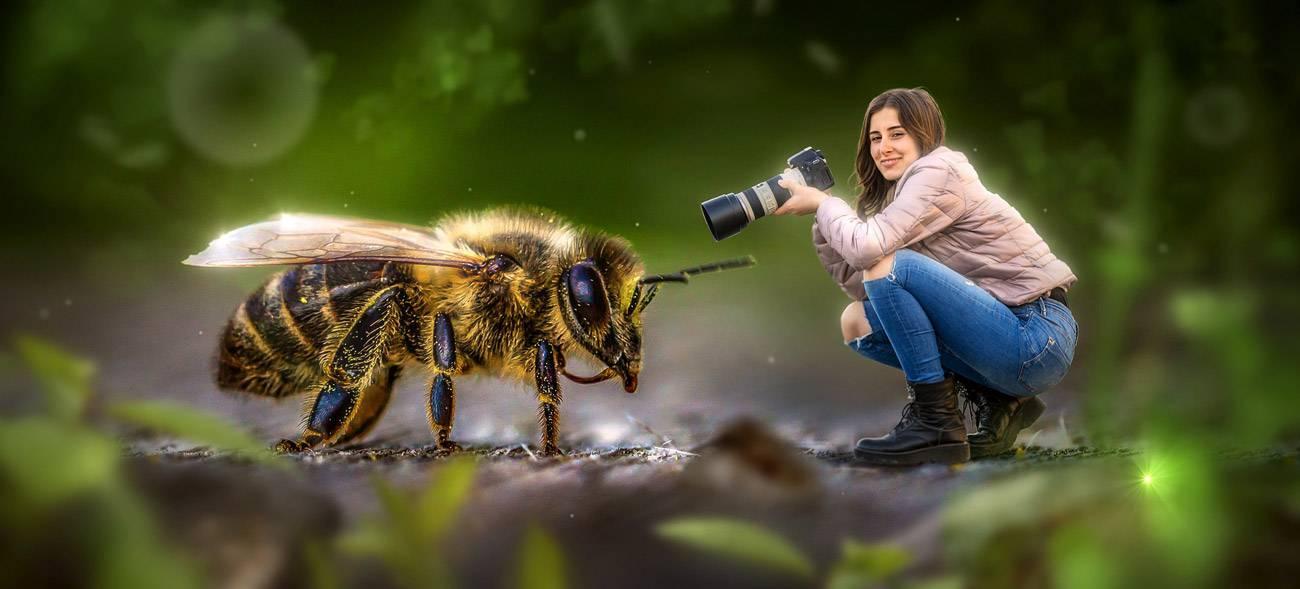 Insektensterben beenden: Kreative Ideen sind gefragt